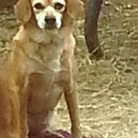 Adopt A Pet :: Sarina - San antonio, TX