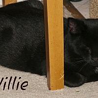 Adopt A Pet :: Willie - Waynesville, NC