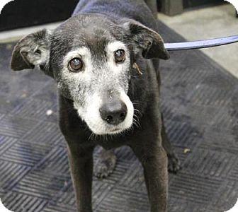 Labrador Retriever/Hound (Unknown Type) Mix Dog for adoption in London, Ontario - Elsa