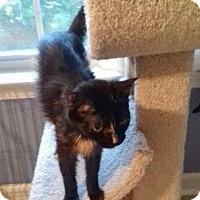 Adopt A Pet :: Pasha - McDonough, GA