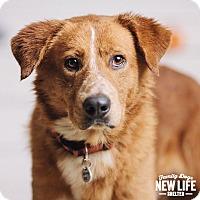 Adopt A Pet :: Benjamin - Portland, OR