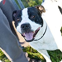 Adopt A Pet :: Ernie - Schererville, IN