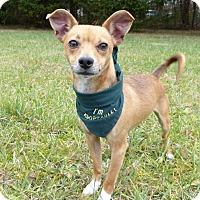 Adopt A Pet :: Cassey - Mocksville, NC