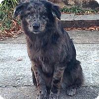 Adopt A Pet :: Matilda - Adopted! - Croydon, NH