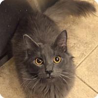 Adopt A Pet :: Blue - Encinitas, CA