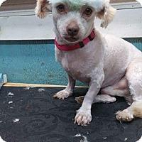 Adopt A Pet :: Freddie - Crump, TN