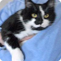Adopt A Pet :: Finnegan - Colmar, PA