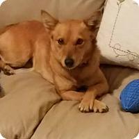 Adopt A Pet :: Kitsune - Fredericksburg, VA