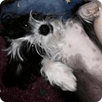 Adopt A Pet :: Ponyo - Hamilton, ON