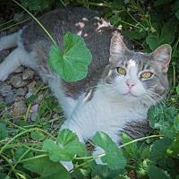 Adopt A Pet :: Fiona - Corinne, UT