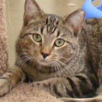 Adopt A Pet :: Bullseye - Greenfield, IN