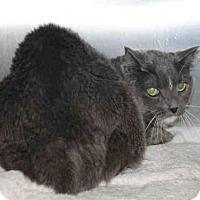 Adopt A Pet :: SALTY WILLIAMS - Los Angeles, CA