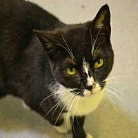 Adopt A Pet :: YOSCA - Rancho Cucamonga, CA