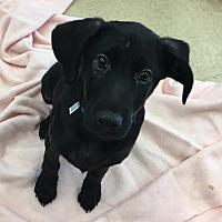 Adopt A Pet :: Bert - Smithtown, NY