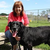 Adopt A Pet :: Cronos - Elyria, OH