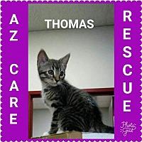 Adopt A Pet :: Thomas - San Tan Valley, AZ