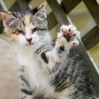 Adopt A Pet :: Widdle - New Freedom, PA