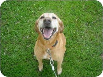 Golden Retriever/Labrador Retriever Mix Dog for adoption in Milaca, Minnesota - Ginger