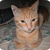 Adopt A Pet :: Little Lady - Shelton, WA