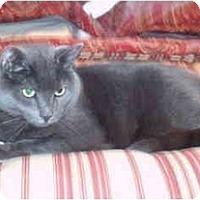 Adopt A Pet :: Rain - Colmar, PA