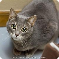 Adopt A Pet :: Henrietta - Fountain Hills, AZ