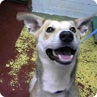 Adopt A Pet :: TROOPER - Atlanta, GA