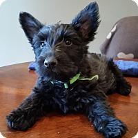 Adopt A Pet :: Belle - Omaha, NE