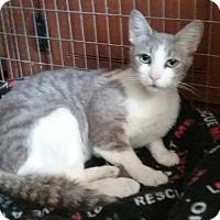Adopt A Pet :: Taytay - Glendale, AZ