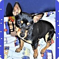 Adopt A Pet :: Trista - San Jacinto, CA