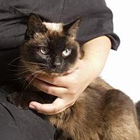 Adopt A Pet :: Nayla - Santa Paula, CA