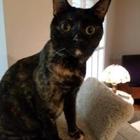Adopt A Pet :: Pippa - Richmond, VA