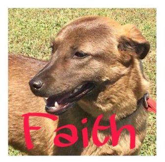 Shepherd (Unknown Type) Mix Dog for adoption in Huntsville, Texas - Faith