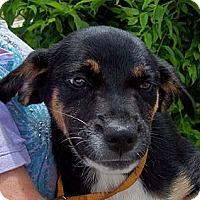 Adopt A Pet :: EMMIE/Summer Spec Pricing - Glastonbury, CT