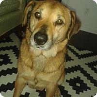 Adopt A Pet :: Caramel - Hamilton, ON