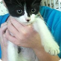 Adopt A Pet :: Roger Dodger - Riverhead, NY