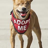 Adopt A Pet :: Mr. Magoo - Van Nuys, CA