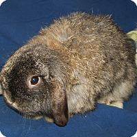 Adopt A Pet :: Nugget - Alexandria, VA