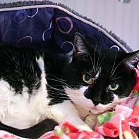 Adopt A Pet :: Coco - Lincoln, NE