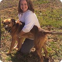 Adopt A Pet :: ROMEO - East Stroudsburg, PA