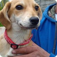 Adopt A Pet :: Fran - Kendall, NY