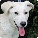 Adopt A Pet :: Trekker
