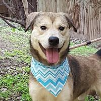 Adopt A Pet :: Branch - Lago Vista, TX