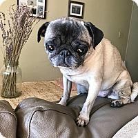 Adopt A Pet :: Maggie - bridgeport, CT