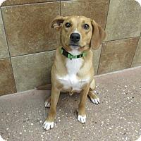 Adopt A Pet :: Phoenix *Petsmart GB* - Appleton, WI