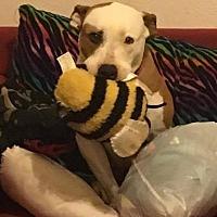Adopt A Pet :: Cami - Boerne, TX