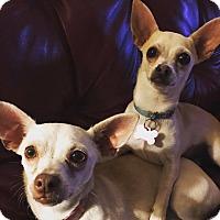 Adopt A Pet :: Lovey and Dovey - Oklahoma City, OK