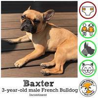 Adopt A Pet :: Baxter - Everett, WA
