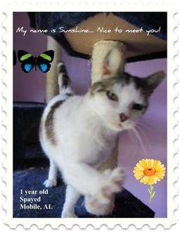 Domestic Mediumhair Cat for adoption in Mobile, Alabama - Sunshine