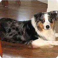 Adopt A Pet :: Dakota - Orlando, FL
