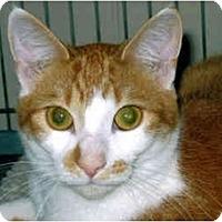 Adopt A Pet :: Sunny - Medway, MA